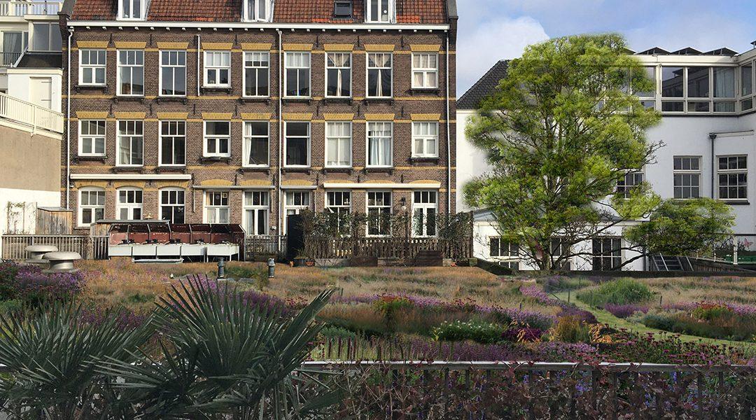 Groen dak Bilderdijkstraat