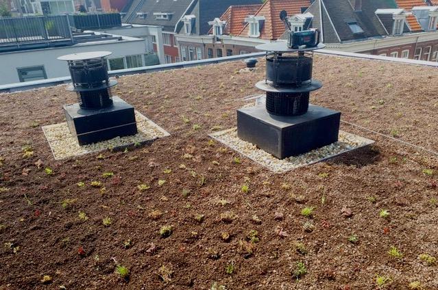 Groen dak gerealiseerd in de Bellamybuurt!