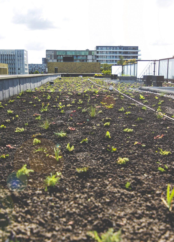Lommerrijk is een groen dak rijker!