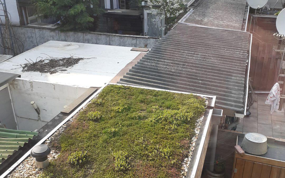 Het groenste dak van Bloemhof