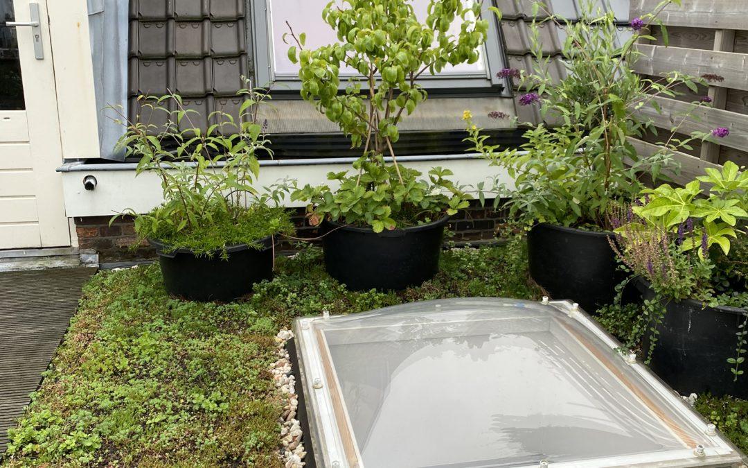 De groene oase van Martijn is af!
